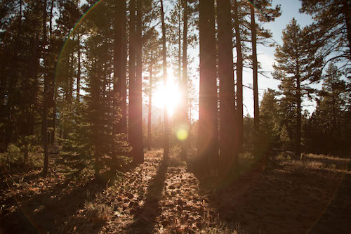 2015-06-Life-of-Pix-free-stock-photos-trees-forest-light-jordanmcqueen